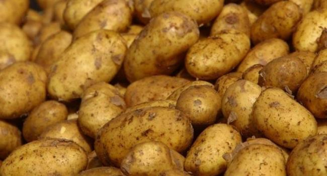البطاطا المهرّبة في بئر الحفي